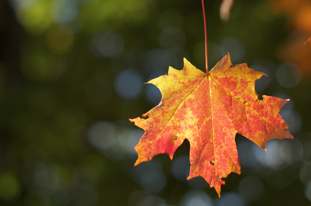 autumn leaves new england photo